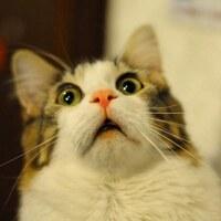 La cara que se les queda a las Señoritas cuando al entrar ven la nueva colección 🙊😹😹😹 Queréis saber porqué?  #michi #newnewnew #detiendasporsalamanca #gatoslovers #pequeñocomercio #novedades #😹